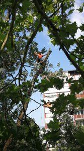 podiranje dreves